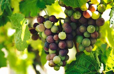 Visit the Wineries and Vineyards in the Lehigh Valley