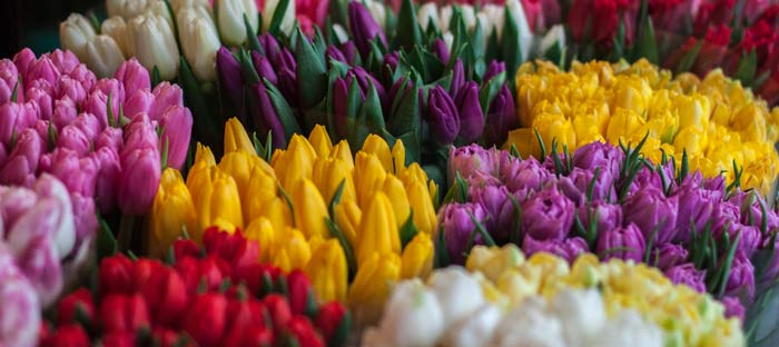 Spring is a wonderful time to enjoy shopping, dining, and the wonderful sights in Lehigh Valley, PA